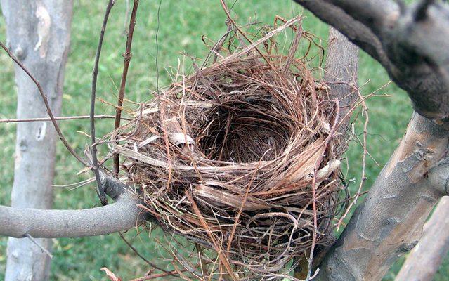 Empty Nest or New Nest?