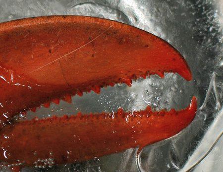 Polenta with Lobster & Mushroom Medley