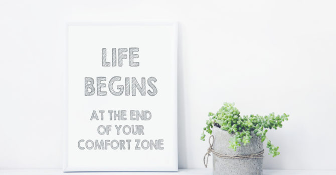 Sign About Comfort Zone On A White Background With A Small Plant.